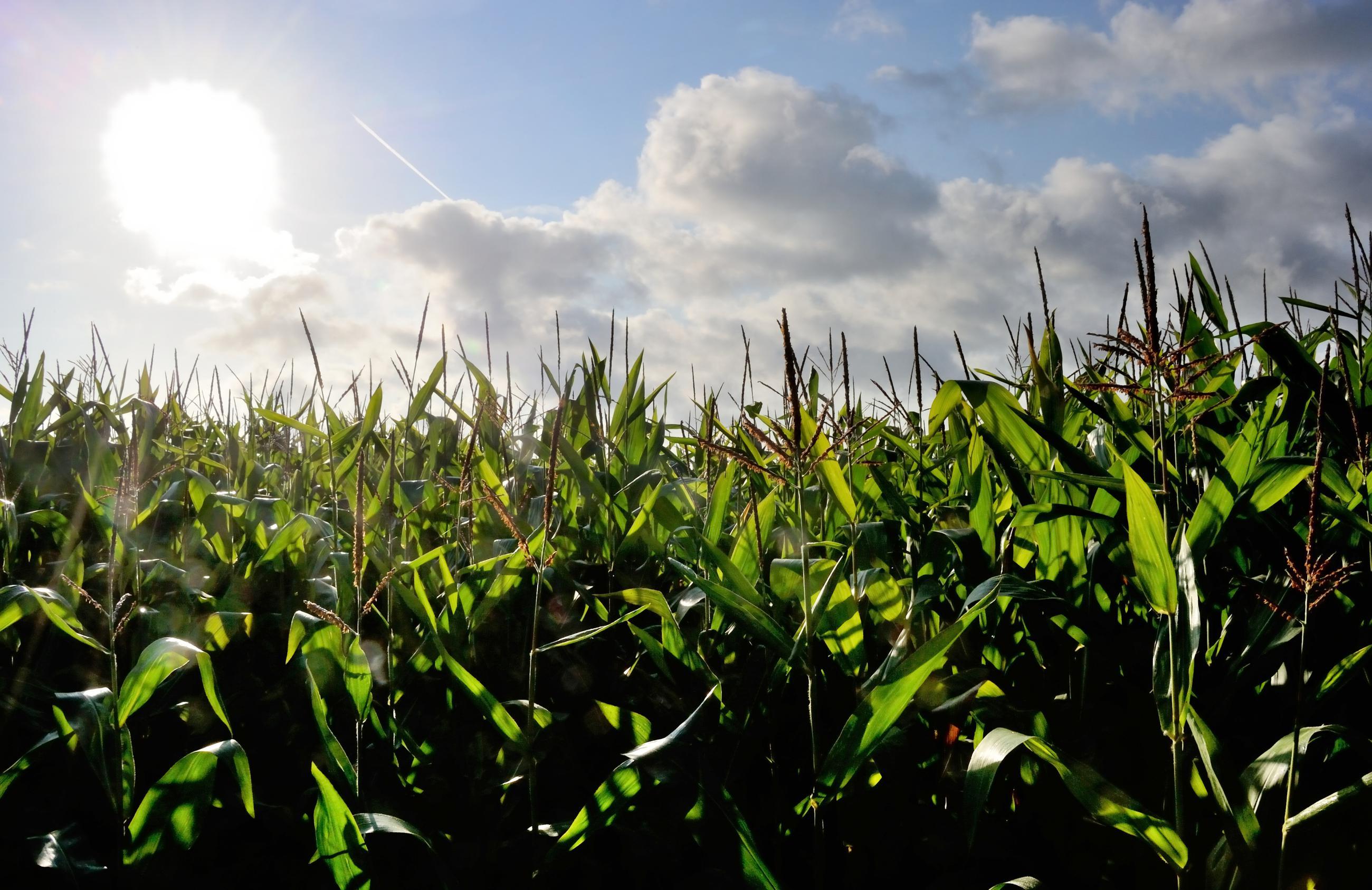 EPA Can't Shake Its Ethanol Headache