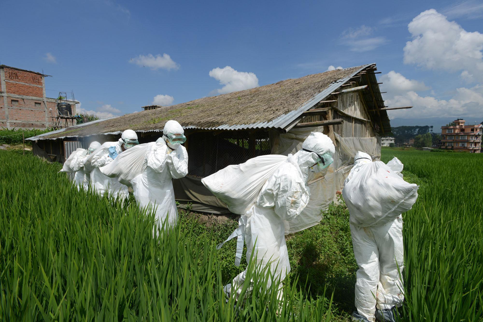 Netherlands Overhauls Biosecurity Rules as Avian Flu Dispute Simmers